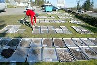 More than 10,000 artifacts were found at the Tse-whit-zen site. Material is spread on trays to dry on the lawn in front of a house converted to an archaeology lab in Port Angeles.