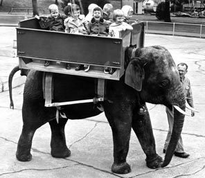 <strong>HITCHING A RIDE:</strong> Children enjoy the first ride of the elephant-ride concession, which opened in 1956 at Woodland Park Zoo. Concessionaire Morgan Berry leads Thonglaw, a male Indian elephant. The rides cost 25 cents each.