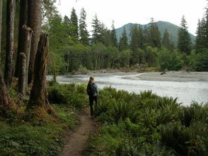 The Hoh River trail in Olympic National Park  winds through mossy forest and skirts the river.  Sen. Patty Murray's reintroduction of legislation would expand the wilderness area in Olympic National Forest by about 200 square miles, creating a buffer around Olympic National Park.