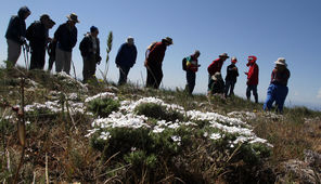 A group enjoys the wildflowers atop Stacker Butte. Volunteer Barbara Robinson, right, points out what's what.