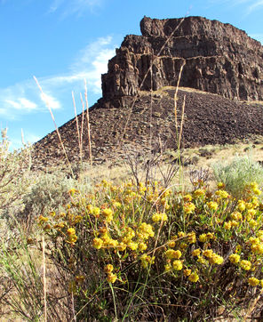Wildflowers along a trail frame Umatilla Rock at Sun Lakes/Dry Falls State Park.