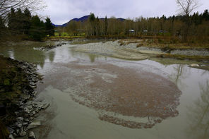 A slurry of silt-laden water is nearly at a standstill in the North Fork of the Stillaguamish just a few miles downstream from the slide that blocked the river Saturday. The river was backing up above the slide.